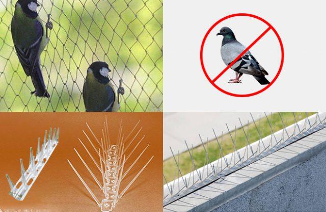 Bird Control Service